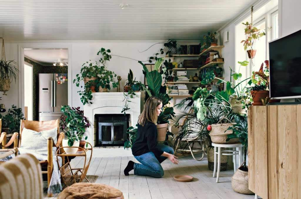 Decorate Your House In An Ecological Way